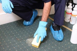 A Move Out Mates' technician removing a stain from a carpet