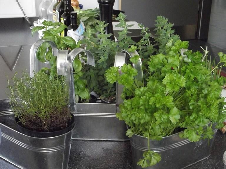 in door herb garden in the kitchen